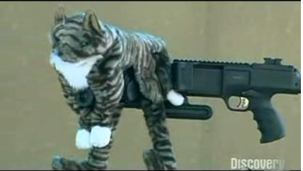 kitten with machine gun