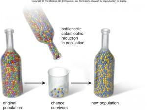 genetic_bottleneck