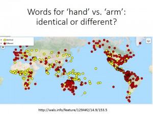 hand_arm